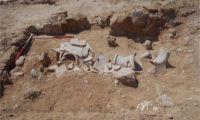 Σημαντικά ευρήματα έφερε στο φως αρχαιολογική σκαπάνη στην περιοχή Χαλά Σουλτάν Τεκκέ